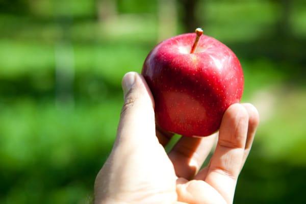 Temptation - Apple